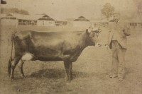 Gould family member with cow